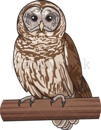 Barred owl. PNG - JPG and vector EPS file formats (infinitely scalable). Image isolated on transparent background.