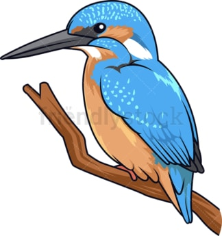 Tropical kingfisher. PNG - JPG and vector EPS (infinitely scalable).
