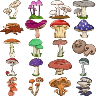 Fresh mushrooms. PNG - JPG and vector EPS file formats (infinitely scalable). Image isolated on transparent background.
