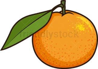 Clementine fruit. PNG - JPG and vector EPS file formats (infinitely scalable). Image isolated on transparent background.