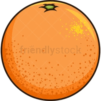 Fresh grapefruit. PNG - JPG and vector EPS file formats (infinitely scalable). Image isolated on transparent background.