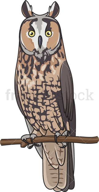 Long-Eared owl. PNG - JPG and vector EPS file formats (infinitely scalable). Image isolated on transparent background.