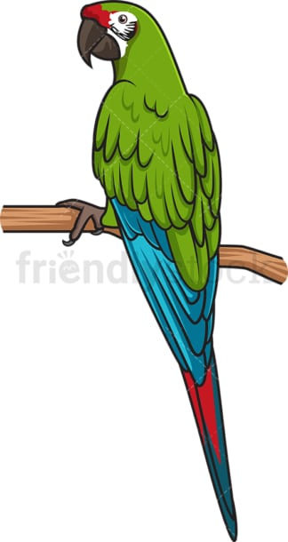 Military macaw. PNG - JPG and vector EPS (infinitely scalable).