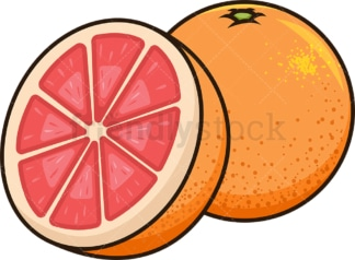Grapefruit cut in half. PNG - JPG and vector EPS file formats (infinitely scalable). Image isolated on transparent background.