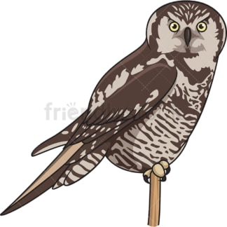 Northern hawk-owl. PNG - JPG and vector EPS file formats (infinitely scalable). Image isolated on transparent background.