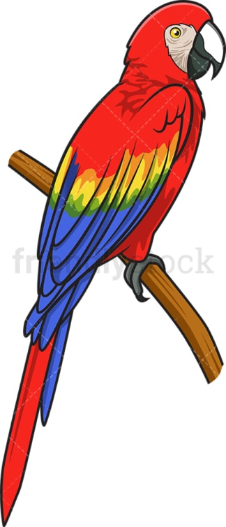 Scarlet macaw. PNG - JPG and vector EPS (infinitely scalable).