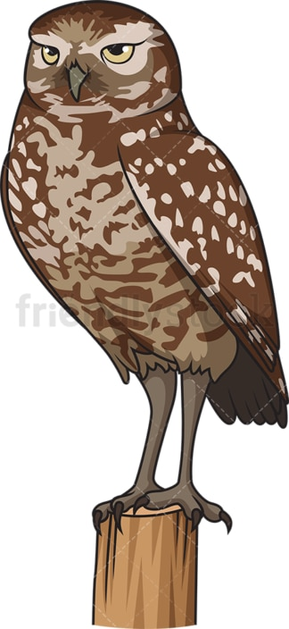Burrowing owl. PNG - JPG and vector EPS file formats (infinitely scalable). Image isolated on transparent background.