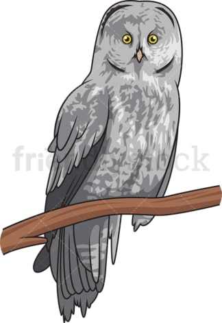 Great gray owl. PNG - JPG and vector EPS file formats (infinitely scalable). Image isolated on transparent background.