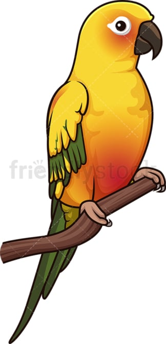 Sun parakeet. PNG - JPG and vector EPS (infinitely scalable).
