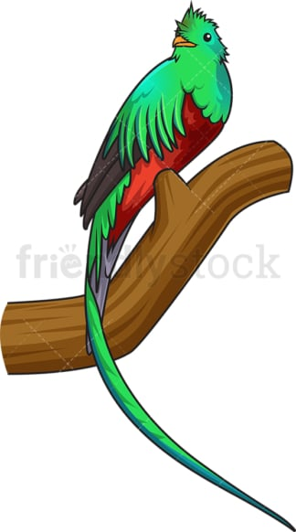 Resplendent quetzal. PNG - JPG and vector EPS (infinitely scalable).