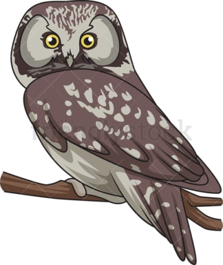 Boreal owl. PNG - JPG and vector EPS file formats (infinitely scalable). Image isolated on transparent background.