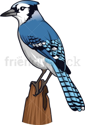 Blue jay. PNG - JPG and vector EPS (infinitely scalable).