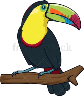 Kell-Billed toucan. PNG - JPG and vector EPS (infinitely scalable).