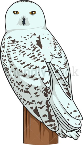 Snowy owl. PNG - JPG and vector EPS file formats (infinitely scalable). Image isolated on transparent background.
