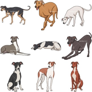Cartoon greyhound dogs. PNG - JPG and infinitely scalable vector EPS - on white or transparent background.
