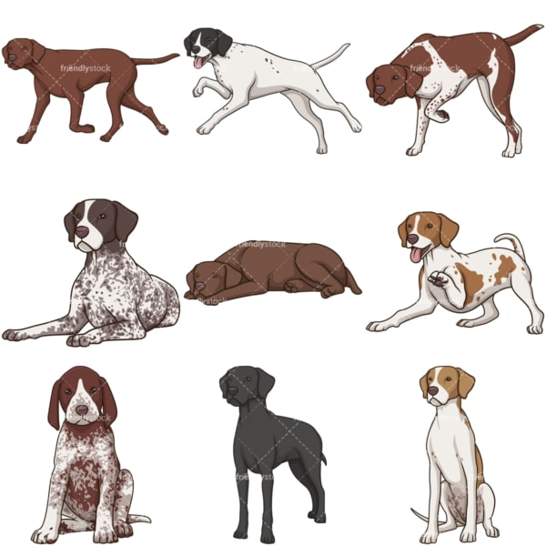 Cartoon pointer dogs. PNG - JPG and infinitely scalable vector EPS - on white or transparent background.
