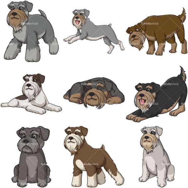 Cartoon standard schnauzer dogs. PNG - JPG and infinitely scalable vector EPS - on white or transparent background.