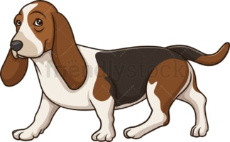 Basset hound walking. PNG - JPG and vector EPS (infinitely scalable).