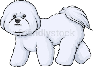 Bichon frise walking. PNG - JPG and vector EPS (infinitely scalable).