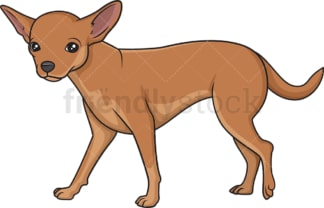 Chihuahua walking. PNG - JPG and vector EPS (infinitely scalable).