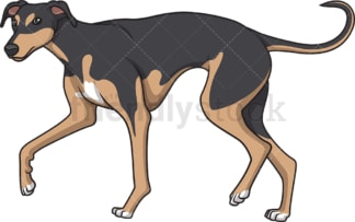 Greyhound walking. PNG - JPG and vector EPS (infinitely scalable).