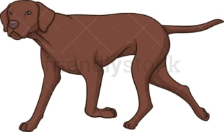 Liver pointer walking. PNG - JPG and vector EPS (infinitely scalable).