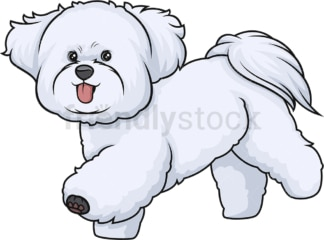 Bichon frise running. PNG - JPG and vector EPS (infinitely scalable).