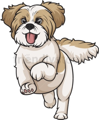 Gold white shih tzu running. PNG - JPG and vector EPS (infinitely scalable).