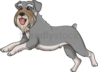 Standard schnauzer running. PNG - JPG and vector EPS (infinitely scalable).