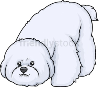 Bichon frise sniffing. PNG - JPG and vector EPS (infinitely scalable).
