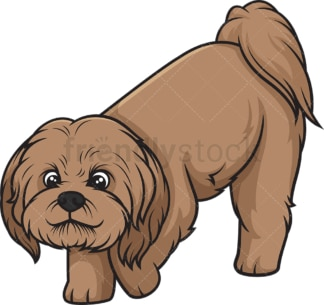 Brown shih tzu sniffing. PNG - JPG and vector EPS (infinitely scalable).
