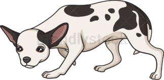 Merle chihuahua sniffing. PNG - JPG and vector EPS (infinitely scalable).