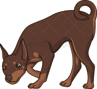 Mini pinscher sniffing. PNG - JPG and vector EPS (infinitely scalable).