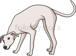White greyhound sniffing. PNG - JPG and vector EPS (infinitely scalable).
