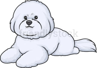 Bichon frise lying down. PNG - JPG and vector EPS (infinitely scalable).
