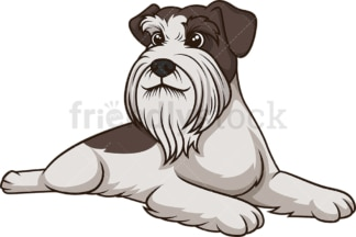 Schnauzer lying down. PNG - JPG and vector EPS (infinitely scalable).