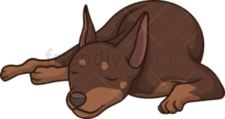 Mini pinscher sleeping. PNG - JPG and vector EPS (infinitely scalable).