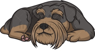Schnauzer sleeping. PNG - JPG and vector EPS (infinitely scalable).