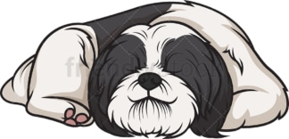 Shih tzu sleeping. PNG - JPG and vector EPS (infinitely scalable).