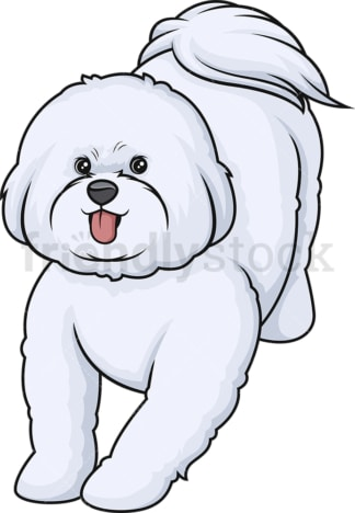 Playful bichon frise. PNG - JPG and vector EPS (infinitely scalable).