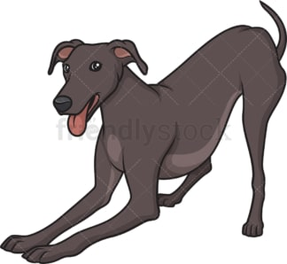 Playful greyhound. PNG - JPG and vector EPS (infinitely scalable).
