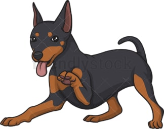 Playful mini pinscher. PNG - JPG and vector EPS (infinitely scalable).