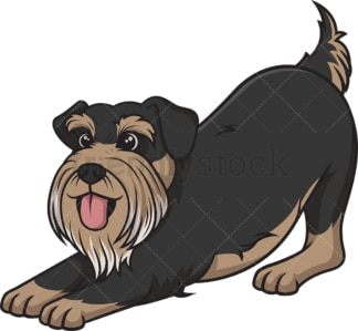 Playful schnauzer. PNG - JPG and vector EPS (infinitely scalable).