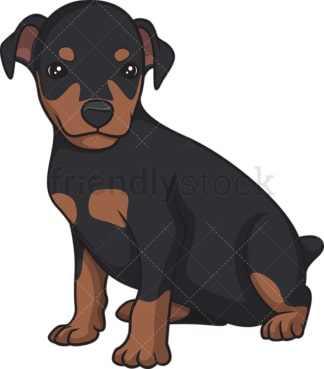 Cute mini pinscher puppy. PNG - JPG and vector EPS (infinitely scalable).