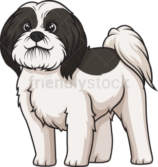 Black parti shih tzu. PNG - JPG and vector EPS (infinitely scalable).