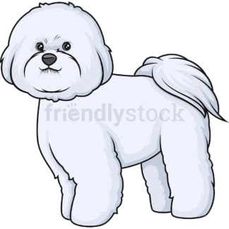 Proud bichon frise. PNG - JPG and vector EPS (infinitely scalable).