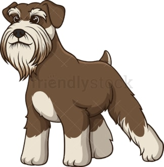 Proud standard schnauzer. PNG - JPG and vector EPS (infinitely scalable).