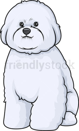 Obedient bichon frise sitting. PNG - JPG and vector EPS (infinitely scalable).