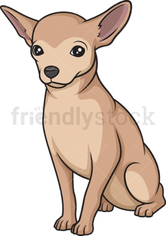Obedient chihuahua sitting. PNG - JPG and vector EPS (infinitely scalable).