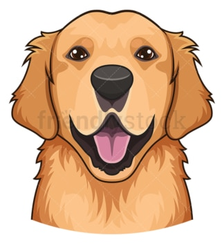 Golden retriever face. PNG - JPG and vector EPS (infinitely scalable).